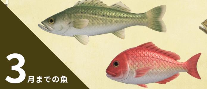 あつ森 南半球 8月 魚
